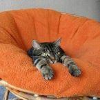 Уютный дом для кота