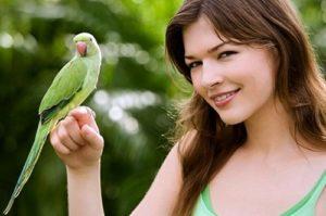 Поговорим с попугаем